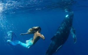 mermaid-whale-2_2214595i