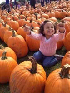 Joy of Pumpkins
