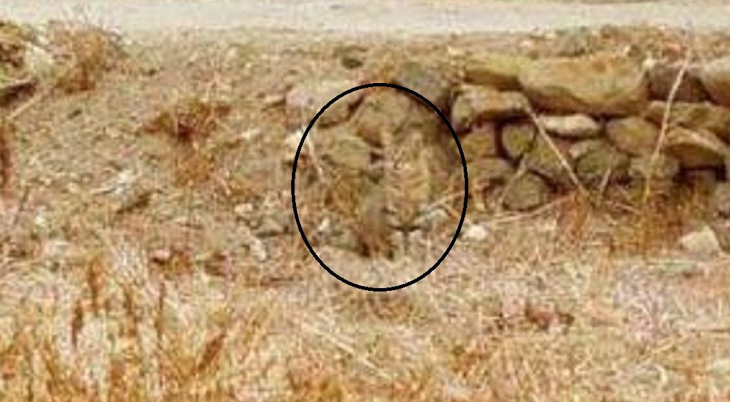 Find_the_Hidden_Cat222