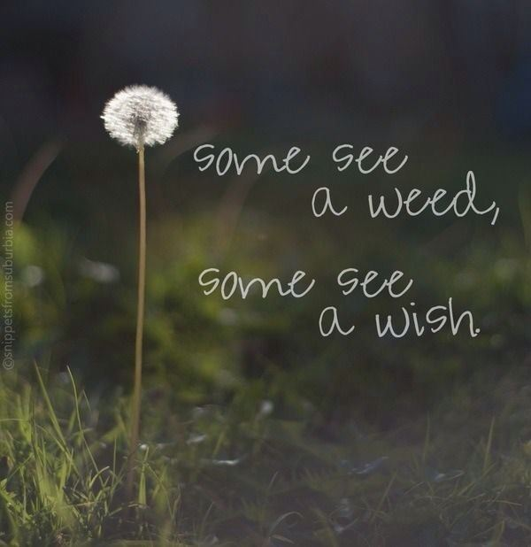 weed or wish