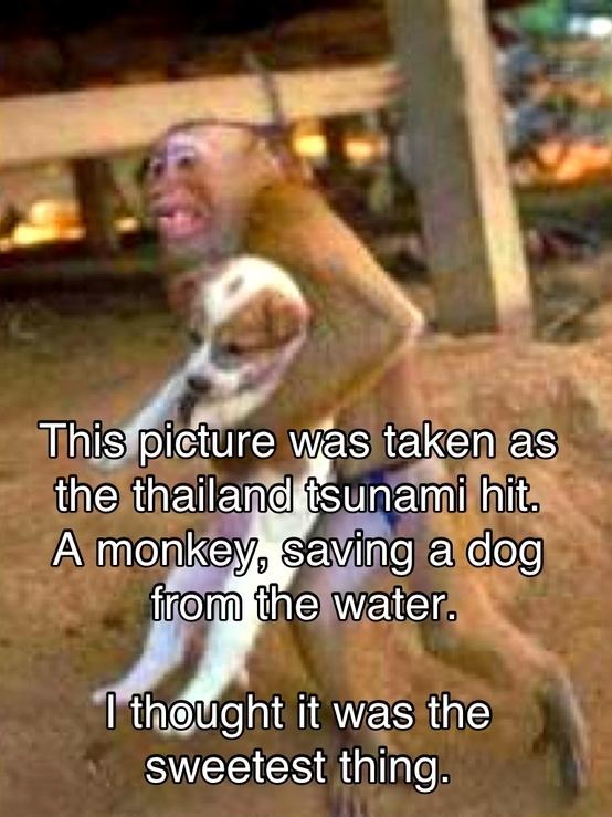 Monkey Saving Puppy