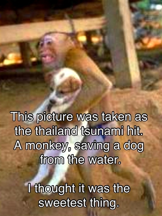 Monkey Saving Puppy