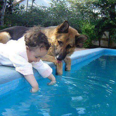 South Orange Humane Society Flickr