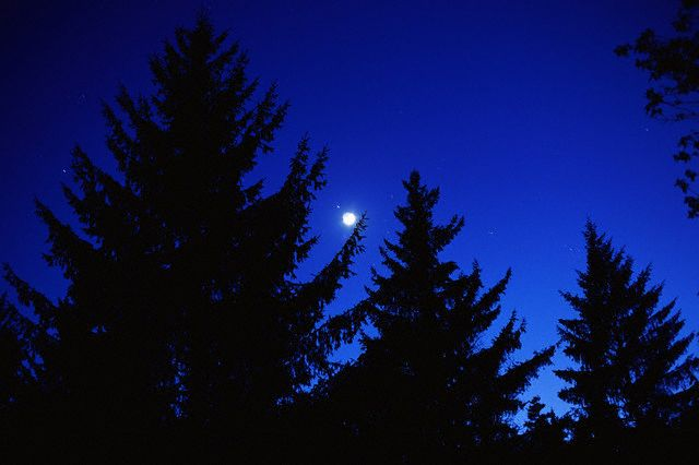 Moon Over Redwood Forest