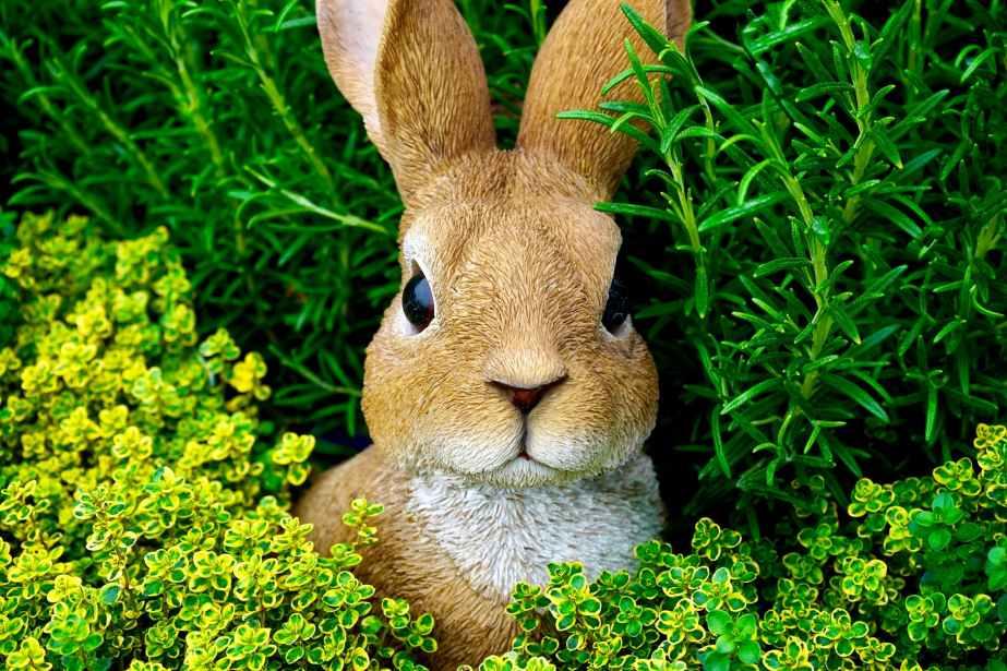 bunny cute ears easter bunny