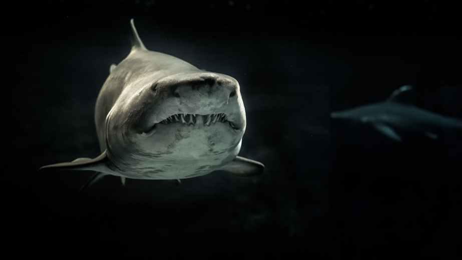 selective photo of gray shark