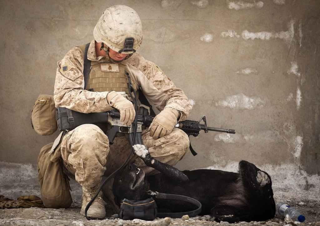 animal army battle canine
