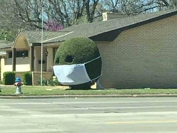 Bush Mask